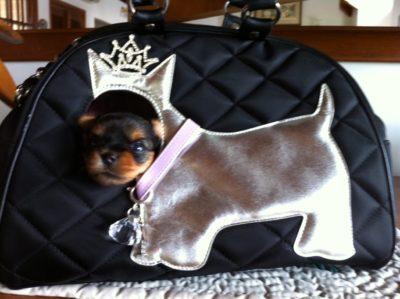 pele-in-purse2