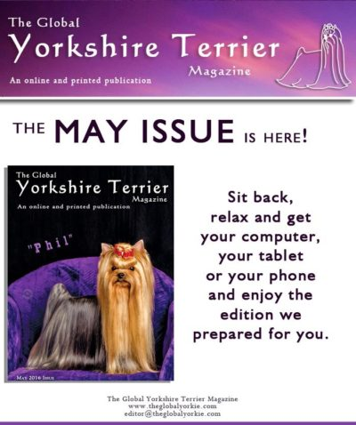 global-yorkshire-terrier-magazine-may-issue